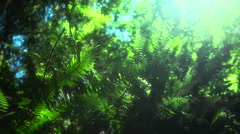 A breeze moves plants across the forest floor. Stock Footage