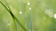 Dew drops on green grass. Shot with slider. V. Stock Footage