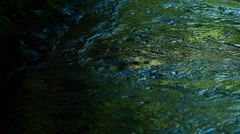 River water reflects green and blue colors. Stock Footage
