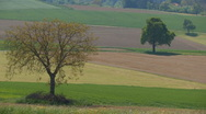 Stock Video Footage of chestnut tree on a field