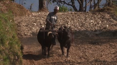 Nepal: Plowing the Field Stock Footage