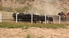 Cowboys Herding Cattle in Corral Stock Footage