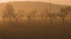 Stock Video Footage of trees and mist at early morning