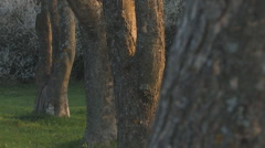 Stock Video Footage of bark of several trees with soft focus on each of them