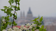 Stock Video Footage of Spring Flowers with City View