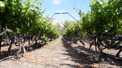 Winery Grapes red wine vinedresser winepress israel wine lifestyle winery israel Stock Footage