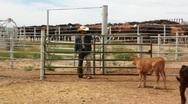 Cowboy Checks Gate Stock Footage