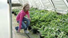 Child (11) looking at plants in green house at plant nursery Stock Footage