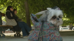 Cute Shih Tzu in Paris park Stock Footage