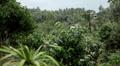 Beautiful tropical forest in, Koh Samui Lamai Island, Thailand HD Footage