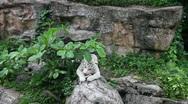 White tiger feeding Stock Footage