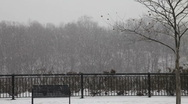 Snowing in a park Stock Footage