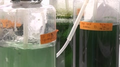 Three flasks containing algae being aired under laboratory lighting conditions. Stock Footage