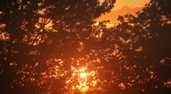 Sunset through the trees (v.1) Stock Footage
