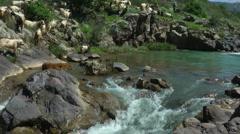 Saar River and Saar Waterfall. Bloom, flowers, sunny day. Slow Motion. Stock Footage