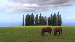 Wild horses eating grass in a beautiful field Stock Footage
