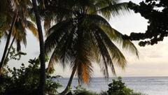 Caribbean beach. Stock Footage