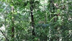 Amazon Rainforest Stock Footage