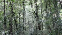 Amazon Rainforest - stock footage