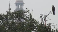 Falcon guarding colonial fort in Pakistan Stock Footage