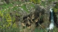 Stock Video Footage of Saar River and Saar Waterfall. Bloom, flowers, sunny day. Slow Motion.