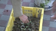 Small plants in cardboard containers are given away for people to transplant Stock Footage