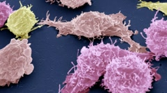 Cancer cells, SEM Stock Footage
