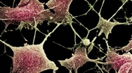 Nerve cells Stock Footage