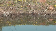 Flowers on the banks of the pond is reflected in the water. Stock Footage
