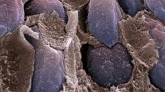 Retina rod cells, SEM Stock Footage