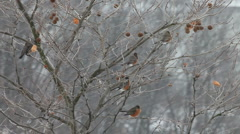 Birds under snow storm Stock Footage