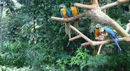 Parrots Stock Footage