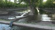 Pecan Tree Reflections Stock Footage