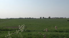Landscape with cows and river, pan-shot Stock Footage