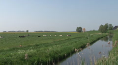 Landscape with cows and river Stock Footage