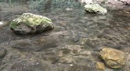 Stock Video Footage of Amud River. Bloom, flowers, sunny day.