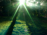 Stock Video Footage of Timelapse Forest Sunlight FX01 Loop SD