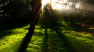Timelapse Forest Sunlight FX02 Loop WEB Stock Footage