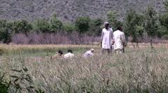 Farmers toil the fields of Abbottabad, Pakistan - stock footage