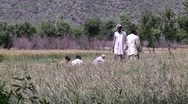 Stock Video Footage of Farmers toil the fields of Abbottabad, Pakistan