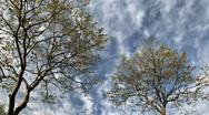 Sky and tree timelapse Stock Footage