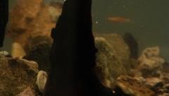 fishtank4 - stock footage