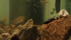 fishtank3 - stock footage