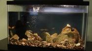 Stock Video Footage of fishtank1