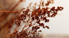 Dry Autumn Plants Stock Footage