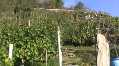Italy Piedmont riding down terraces 4 Stock Footage