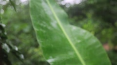 Banana Leaf in the Rain Stock Footage