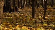 Stock Video Footage of Couple with a baby walking through woods in a park in Moscow