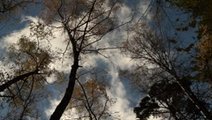 Clouds move quickly over tall, colorful trees Stock Footage