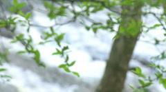 Mountain Creek & Trees Rack Focus - HD 720 Stock Footage